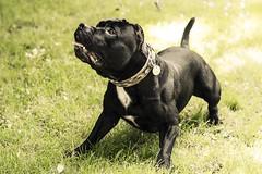 [フリー画像素材] 動物 1, 犬・イヌ ID:201207081000