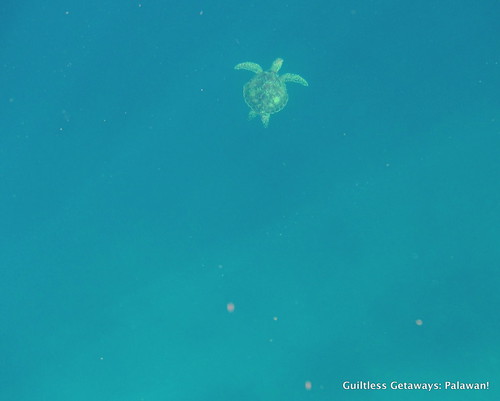 turtle-swimming-photo-el-nido-palawan