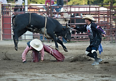 animal sports, rodeo, cattle-like mammal, bull, event, sports, charreada, matador, bull riding,