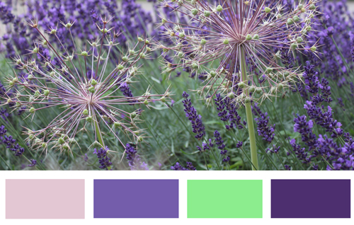 allium-storyboard-w