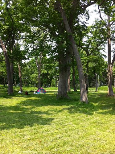 北海道露營-國設知床野營場