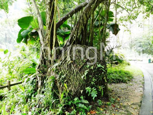 Bukit Batok Nature Park 03