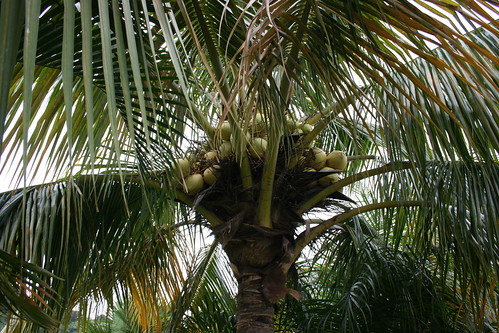 More coconut acquisition