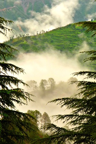 trees india mountains fog himalayas riceterraces uttarakhand
