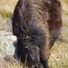 Wild Pony (Derek Mills)