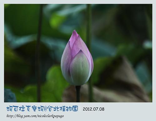 台北植物園1