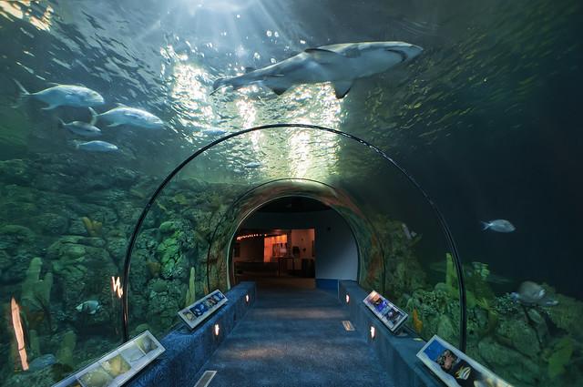 Moody Gardens Aquarium Pyramid Flickr - Photo Sharing!