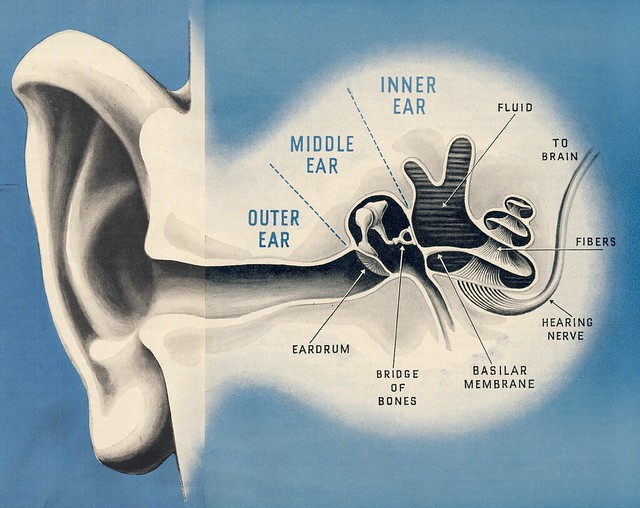 The Inside Of Your Ear