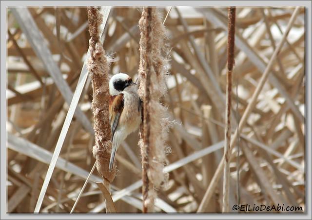 20 Pájaro Moscón (3) 2