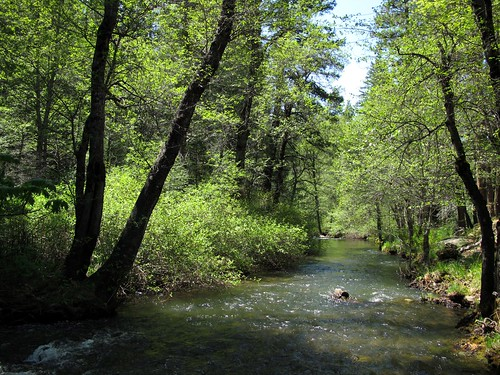california beauty creek forest outdoors spring stream greenery sierranevada exploration discovery riparian creekside plumascounty flowingwater ncal plumasnationalforest greenhorncreek zoniedude1 canonpowershotg11 earthnaturelife greentranquility