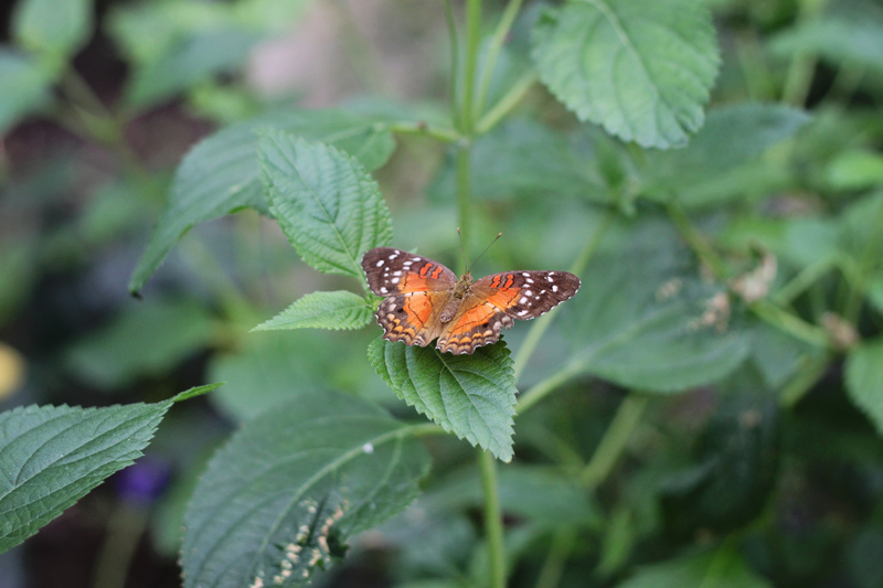 butterfly3-blog
