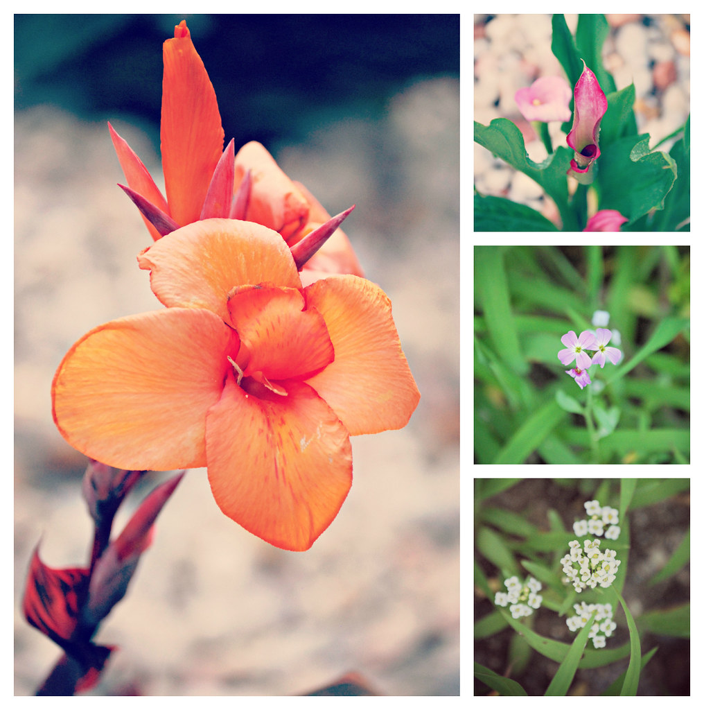 flowercollage2