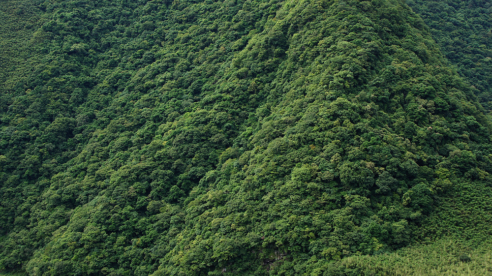 巨木群,與往拉拉山的路上-007