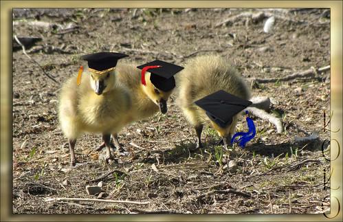Huey, Dewey & Louie graduate