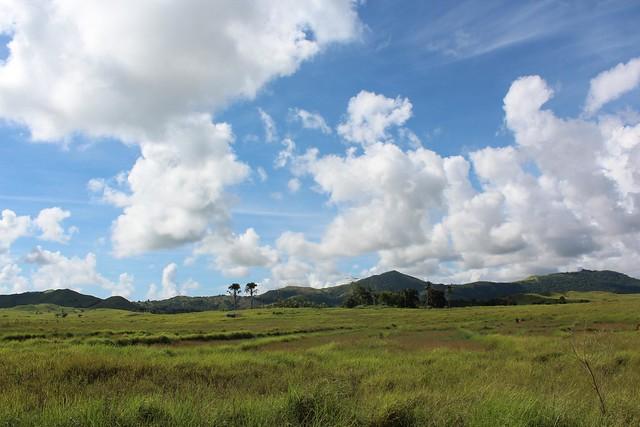 Cattle pasture in Masbate, Philippines