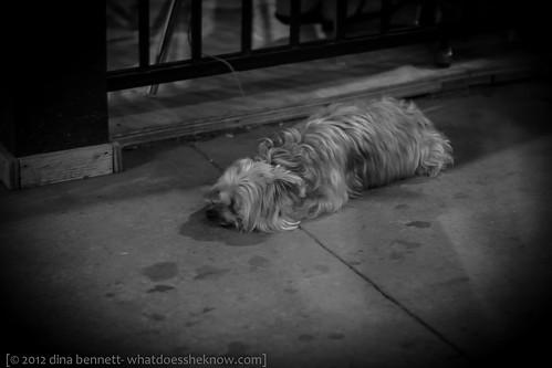 doggie sulk by dina bennett