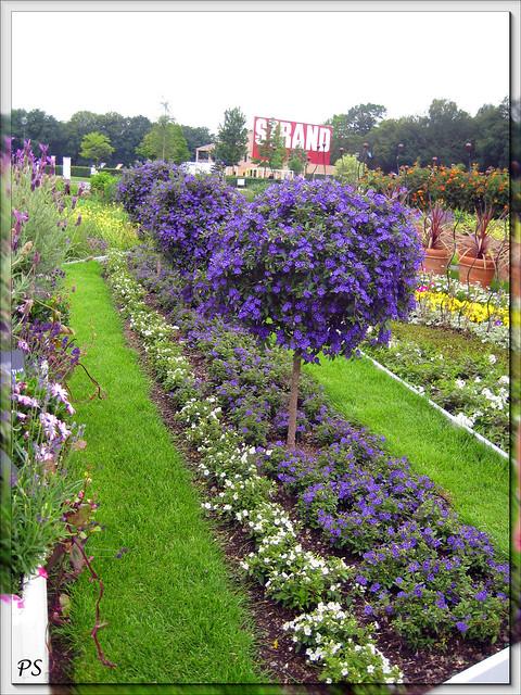 Row Flower Garden : Flower rows flickr photo sharing