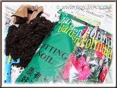 Potting soil used to propagate a Staghorn Fern (Platycerium bifurcatum)