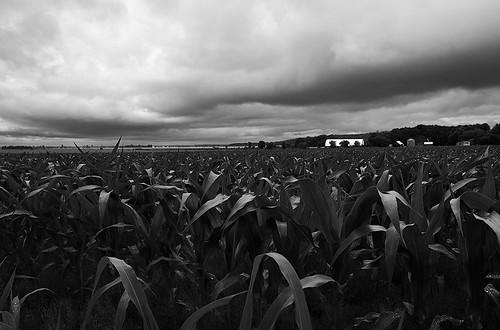 bw field clouds countryside corn nikon quebec marthe nb mais farms 24mm nikkor nuages ste ferme champ montérégie campage d700 noiretblaanc