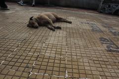 Sleeping Dog Shot By Marziya Shakir 4 Year Old by firoze shakir photographerno1