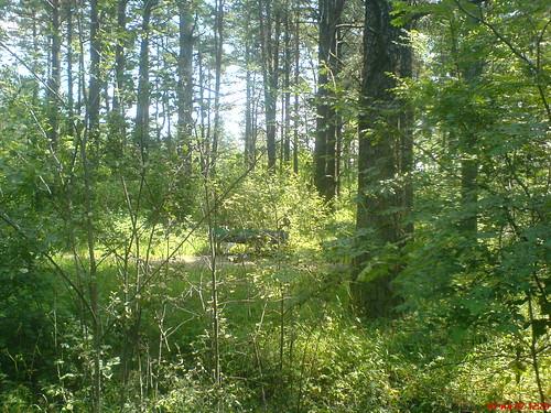 Лесной житель by Beliashou