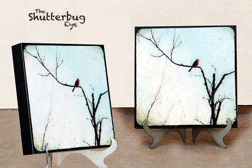 """In Branches"" Stand Out Display by The Shutterbug Eye™"