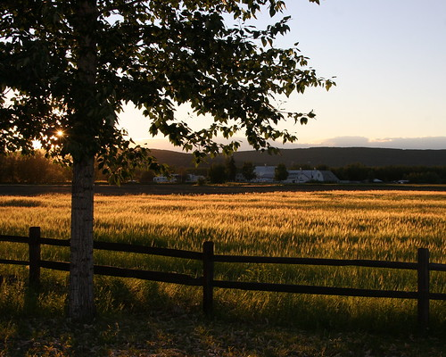 sunset field grass alaska golden farm fairbanks creamersfield