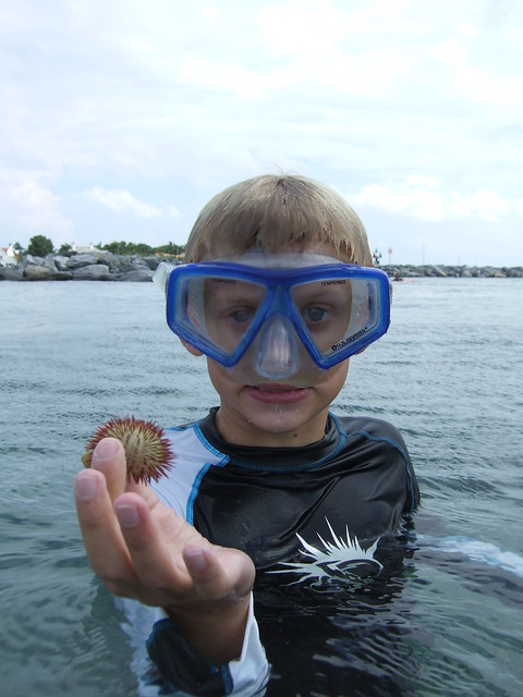 Sawyer finds another sea urchin.
