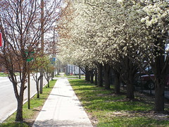 Dogwood Lane