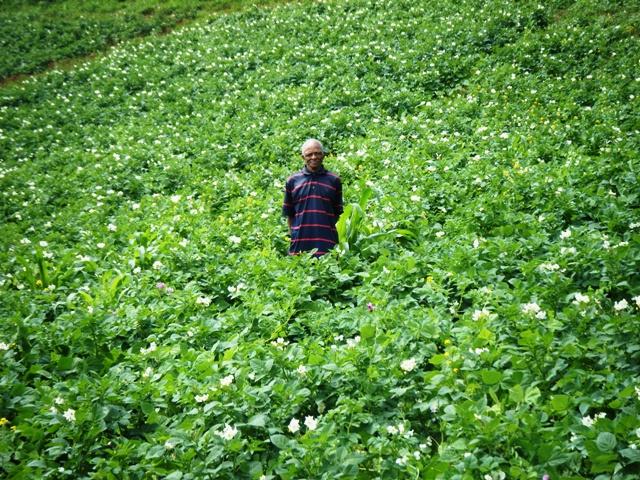 Haiti farmer abundance