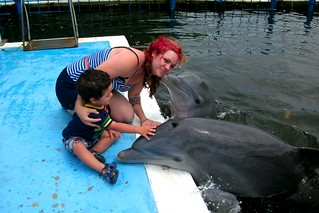 See dolphins at Delphinario Varadero - Things to do in Varadero