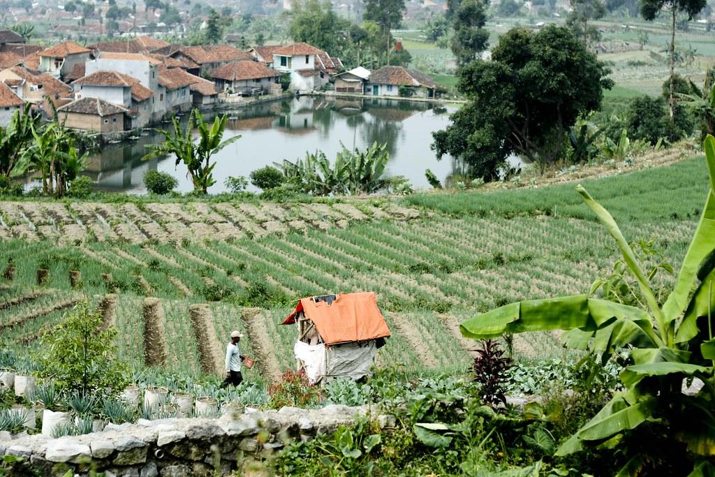 southeast asia farming