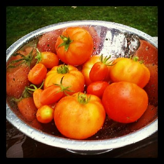 Today's container and grape #tomato harvest #igrewit #containergarden #salad #yumo #sodelicious #food #picked #fresh