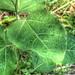 Vert 3 - Green 3