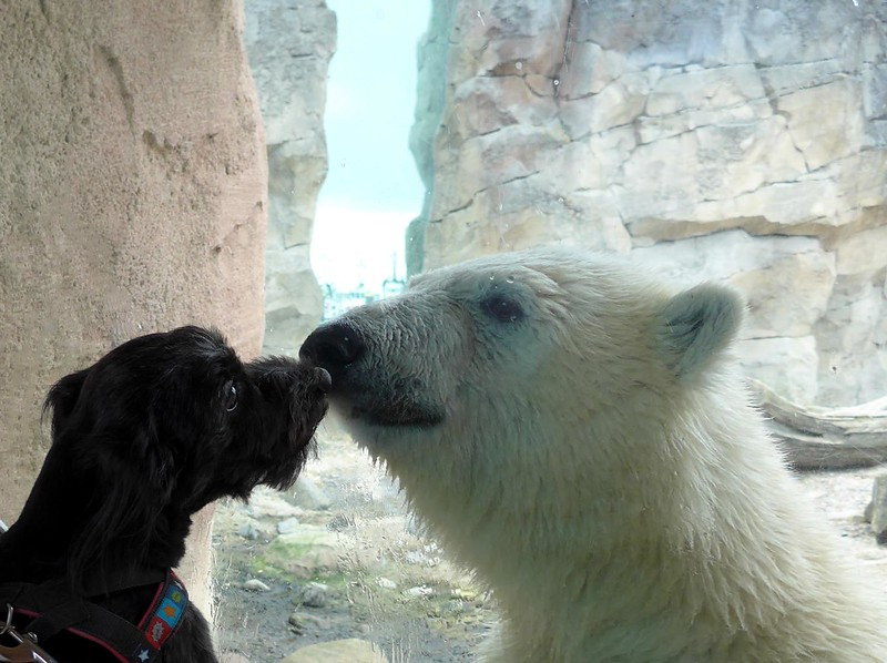 the buddy and the bear