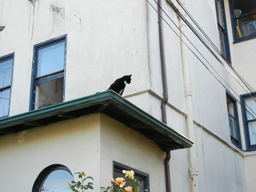 Cat on Rooftop _ 8677
