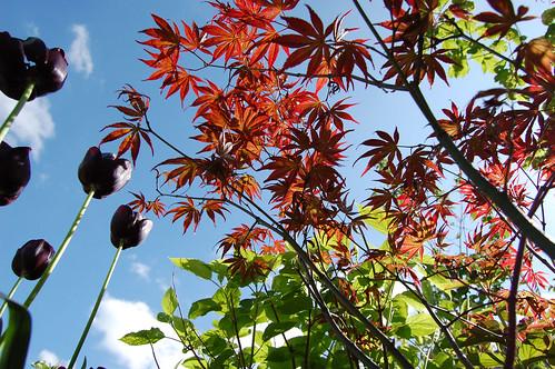 20120506 spring in the garden :) 2