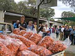 Carrots for free-feeding were provided at each of the three workshops