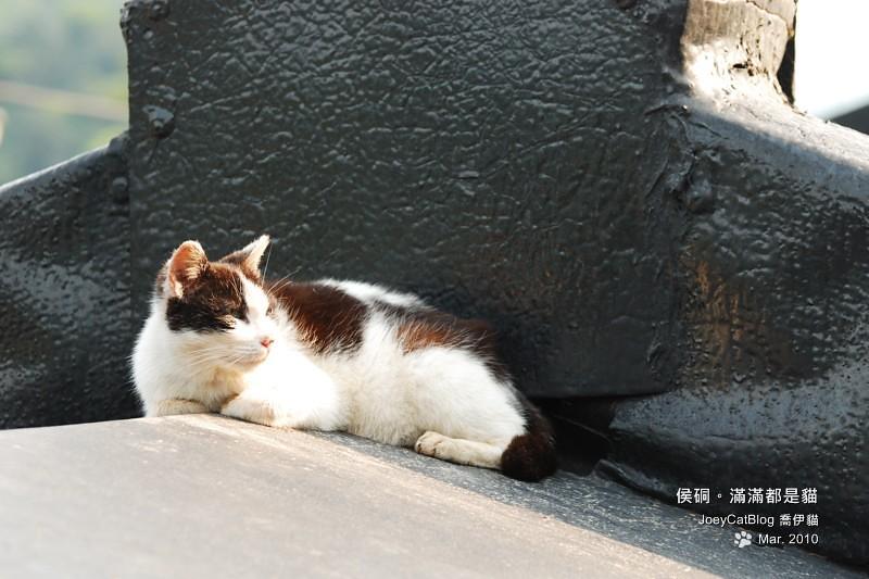 2010_0330_侯硐。滿滿都是貓DSC_0027