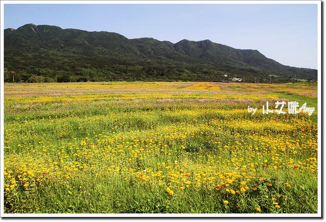 滿州花海IMG_1444