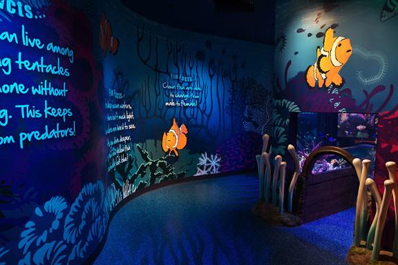 Sea Life Kansas City Aquarium Flickr Photo Sharing