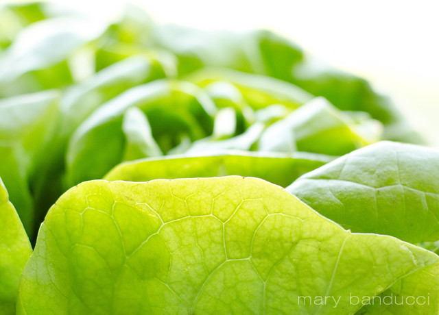 Butter Lettuce by Mary Banducci