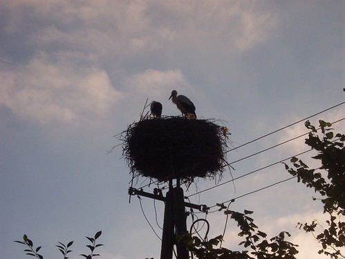 Beautiful Evening, Storks in their Nest by xpisto1