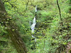 Stock Ghyll Force, Ambleside (2)