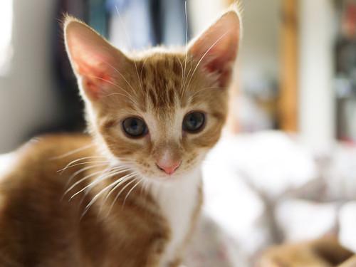 [フリー画像素材] 動物 1, 猫・ネコ, 子猫・小猫 ID:201206131000