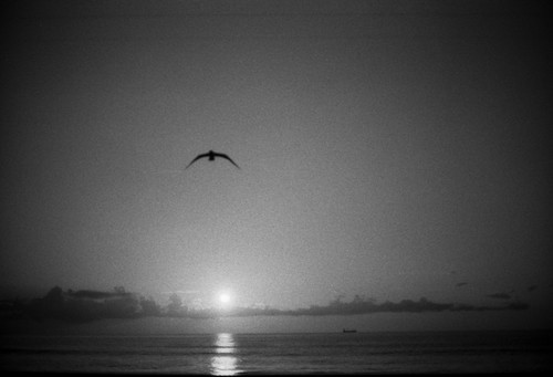 bird of Peace by Kasper83