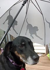 Umbrella_Lola_62612b