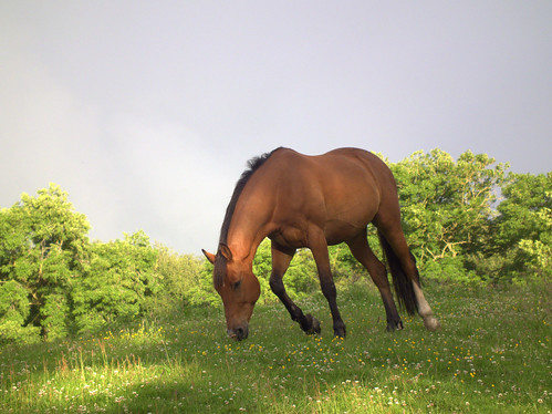 horses by willg willg.photography, on Flickr http://www.flickr.com/photos/willgphotography/