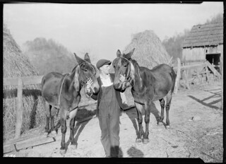 A close-up of Gaines McGlothin with his two mules. McGlothin has two cows and sells milk and butter. He also raises hogs and chickens and cattle for beef, November 1933