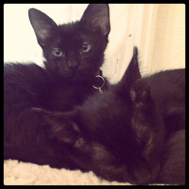 Meet my beautiful boys, Dorian and Salem!